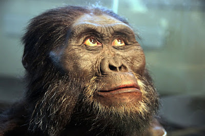 New 'Human Ancestor' Species Discovered