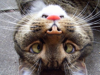 [Image: upside+down+cat+is-an+angry+bunny.jpg]