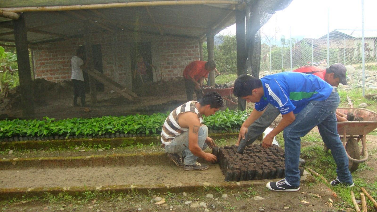 Zamora chinchipe productores de la chonta se fortalecen for Viveros en zamora
