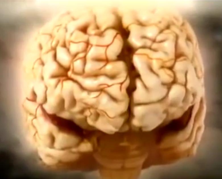 Beyin Hücreleri - Bilinçaltı - Zeka - Serkan Karaismailoğlu