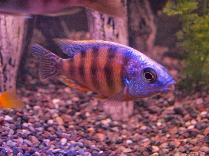 http://tntoday.utk.edu/2014/10/20/study-finds-fish-just-wanna-have-fun/