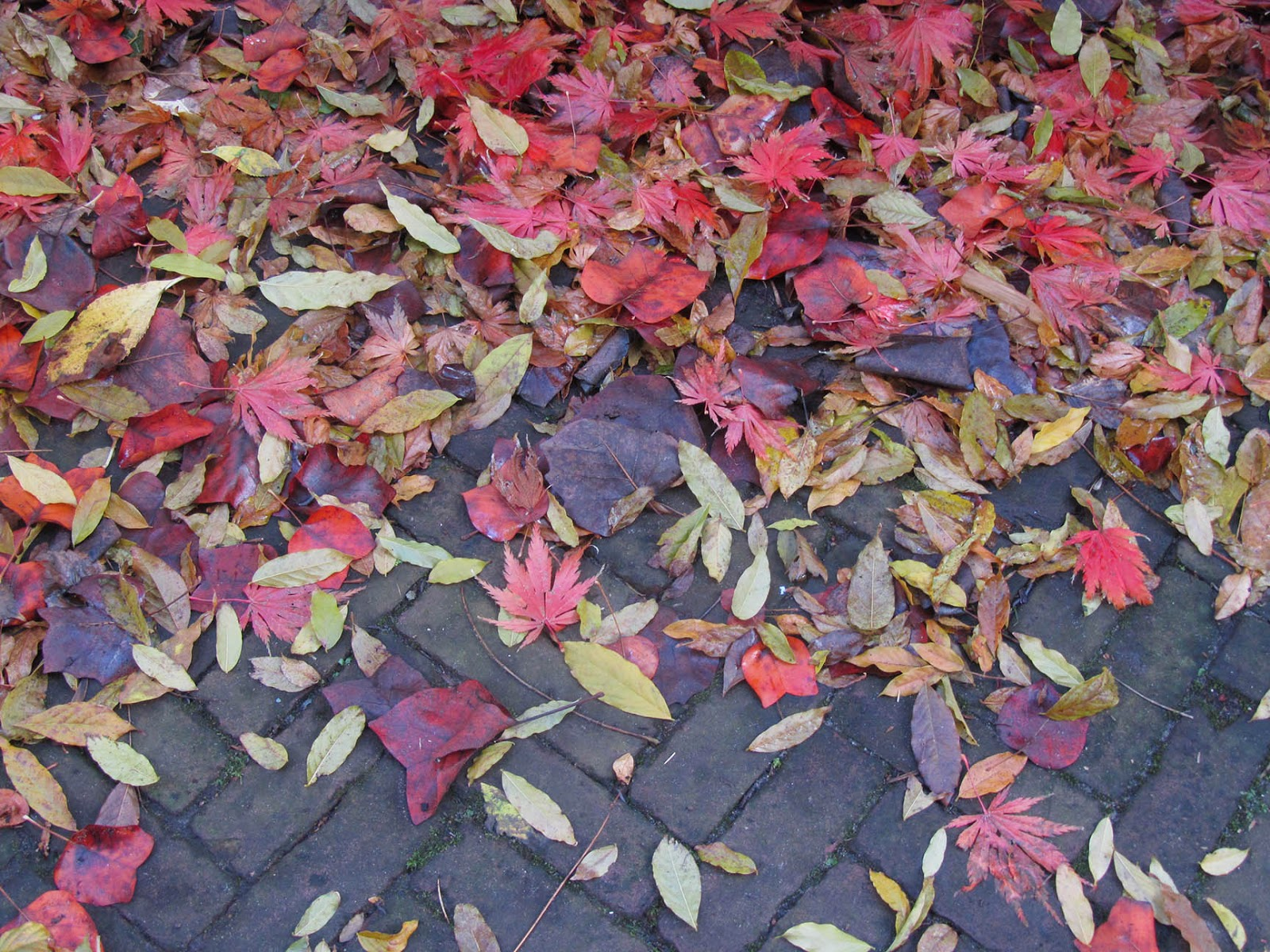 red leaves on sidewalk