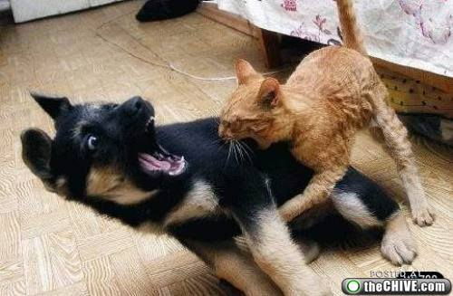 cat and dog fight Photo