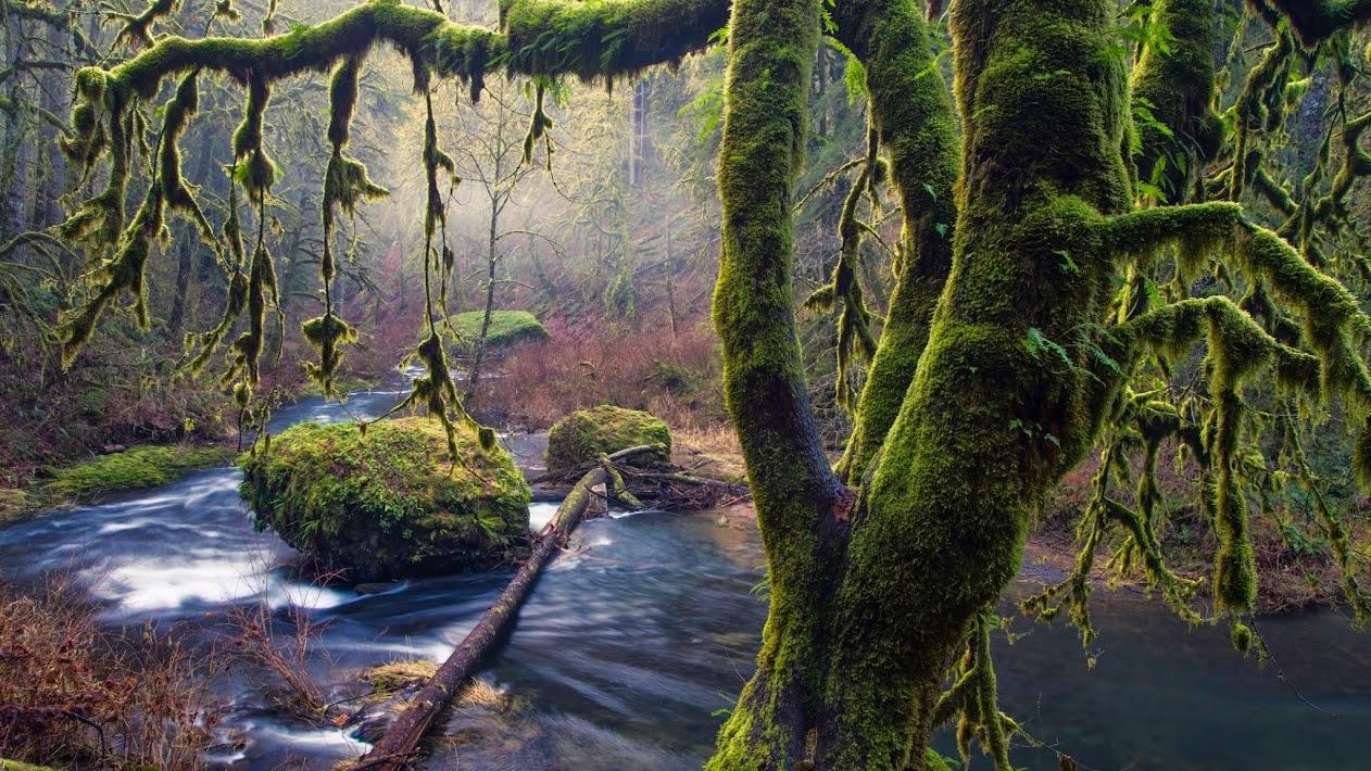 waterforest