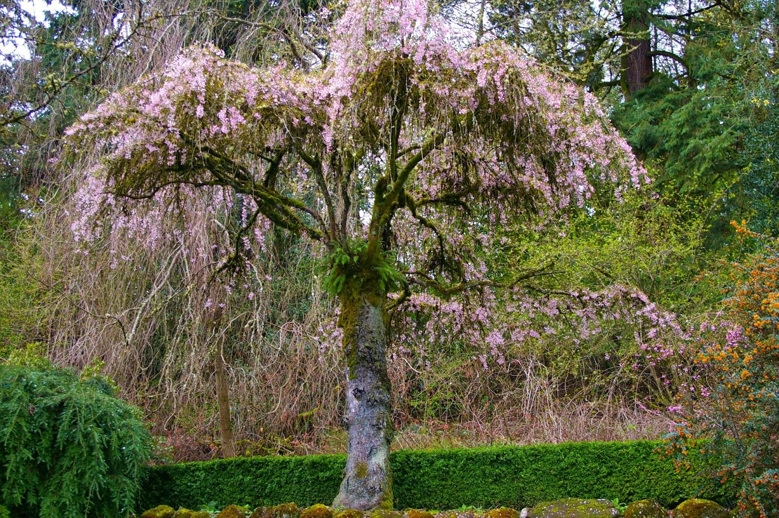 Tied Up In Ribbon Portlands Secret Garden