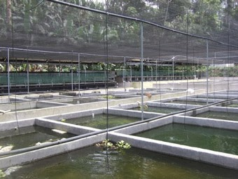 Eudog for Criadero de peces ornamentales