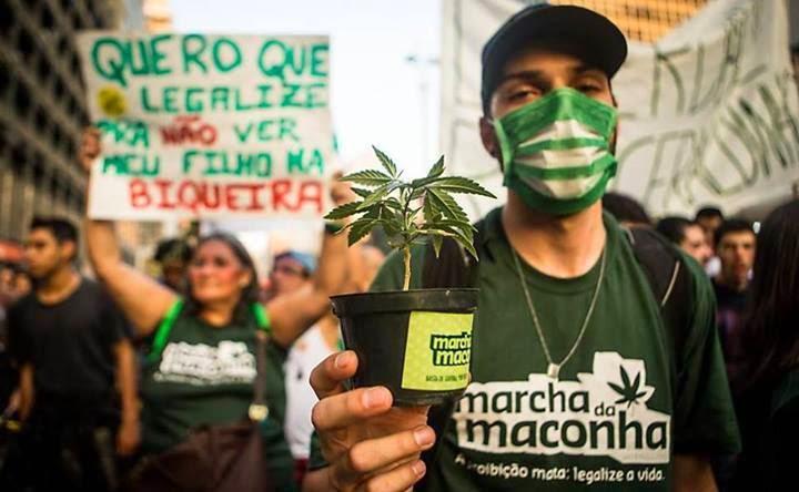 Estudo do Senado defende legalização da maconha controlada no Brasil