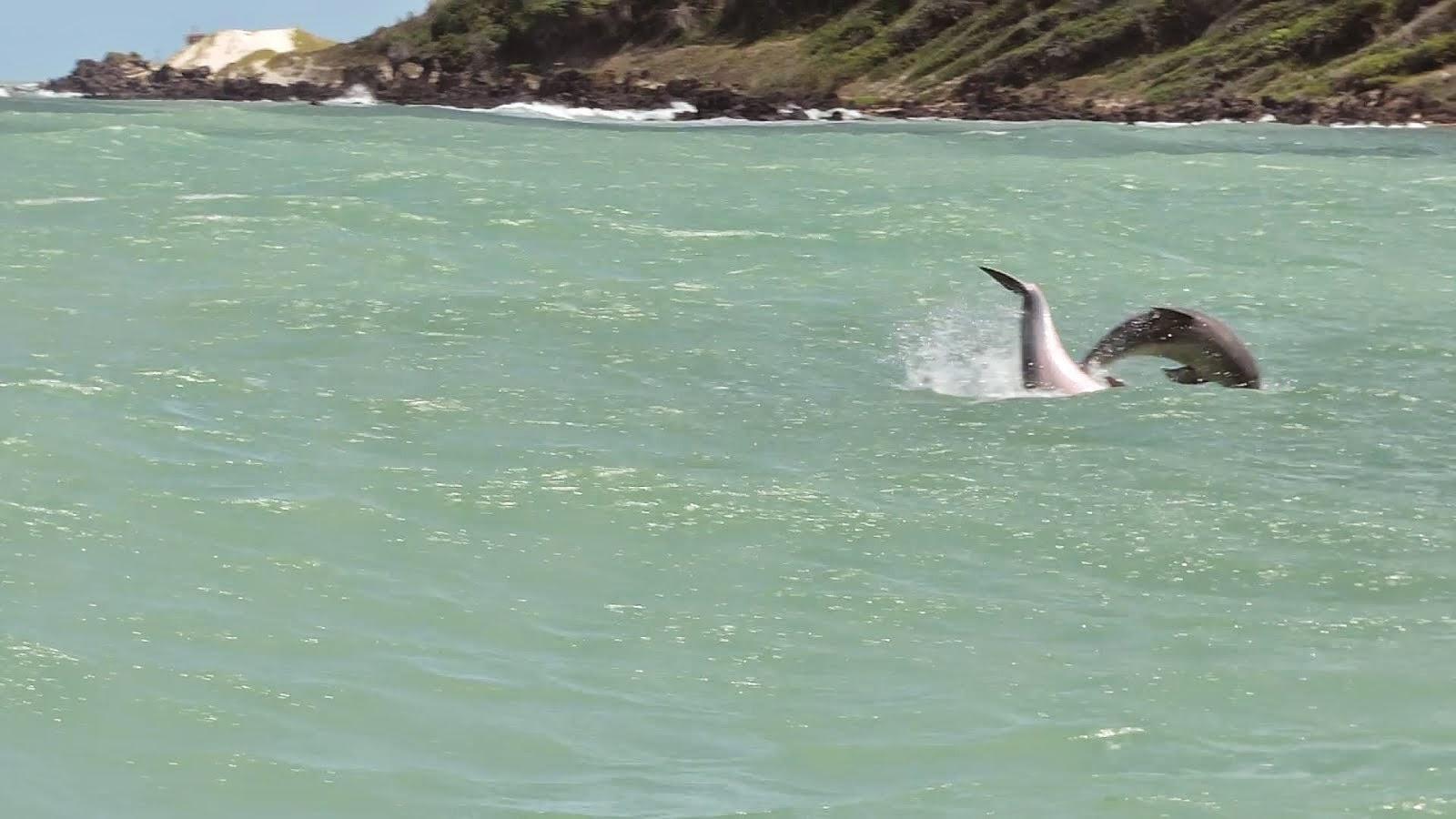 Coco Beach Dolphins