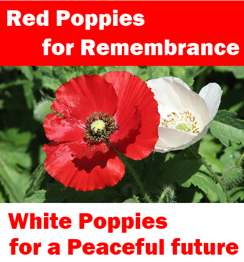 red poppy memorial day poem
