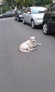 Ο σκυλακος της φωτο εμφανίστηκε στο Μοσχάτο πριν λίγες ημέρες.  Μήπως τον αναγνωρίζει η τον αναζητα κάποιος;