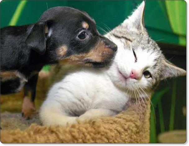 http://2.bp.blogspot.com/-FrshsbAHF3Y/Th1bybzR5SI/AAAAAAAAMuM/vj7YBkQt25U/s1600/animals-in-love-Cute-animals-cat-and-dog-love.jpg