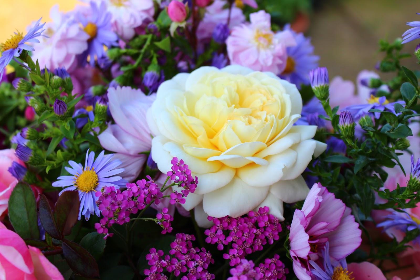 Roses du jardin ch neland saint simon emanuel en fleur for Egayer synonyme