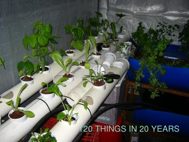 nft aquaponics aquaponics is equite a new method of nearing harvesting ...