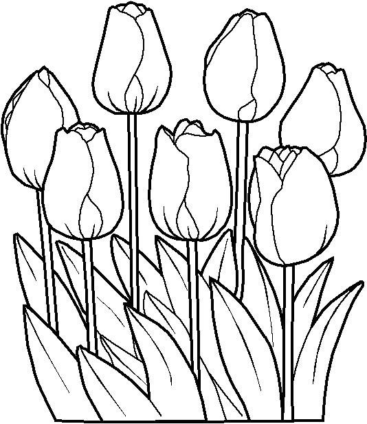 planse de colorat flori de 8 martie