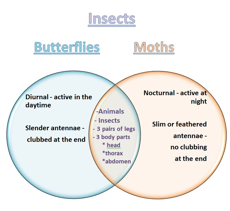 Learning ideas grades k 8 venn diagram butterflies and moths venn diagram butterflies and moths ccuart Choice Image