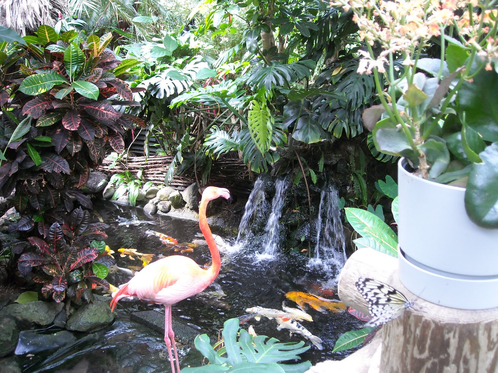 Terria Gary Victoria Butterfly Gardens