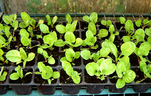 Preparar tierra para semillero jon s life - Tierra para semilleros ...