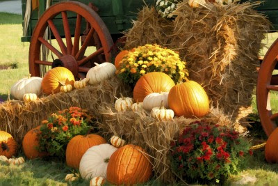 Picture of autum bounty
