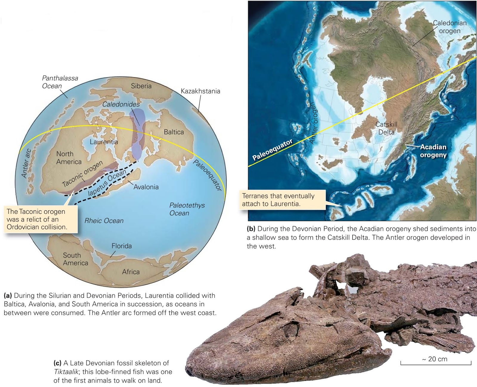 The Devonian period of the Paleozoic era: characteristics, major events, animals and plants 92