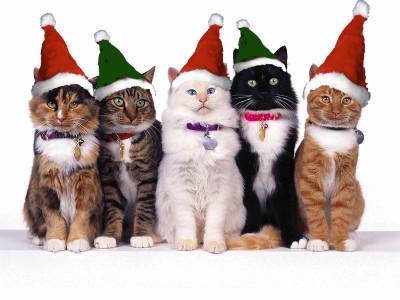 Natal, estrela, cores, gatos,