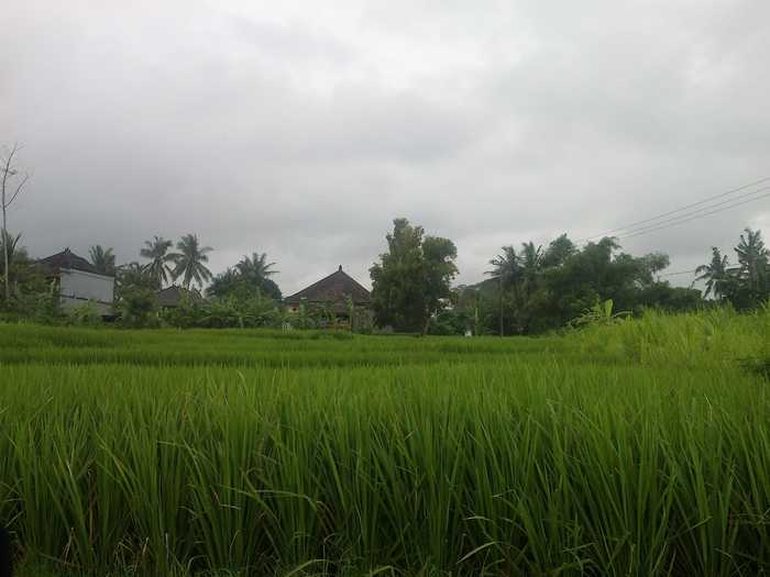 Agricultural land conversion to residential in Bali
