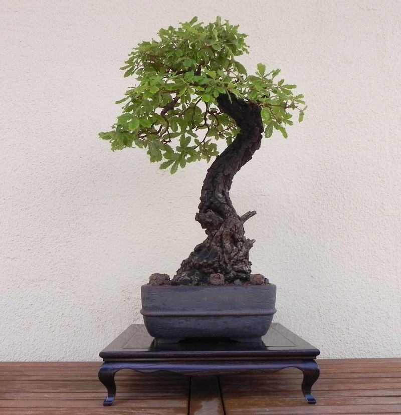 Mis bonsais y mis aficiones nueva mesa para - Mesas para bonsai ...