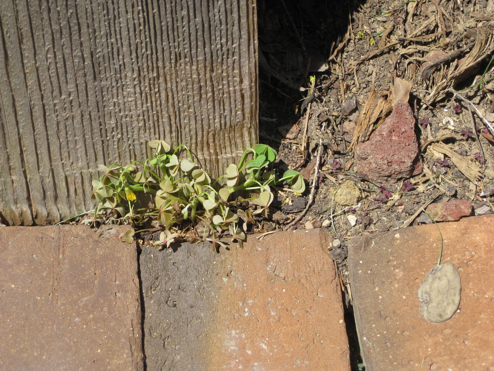 Sweet Peas and Pumpkins: Homemade Earth-Friendly Weed Preventer