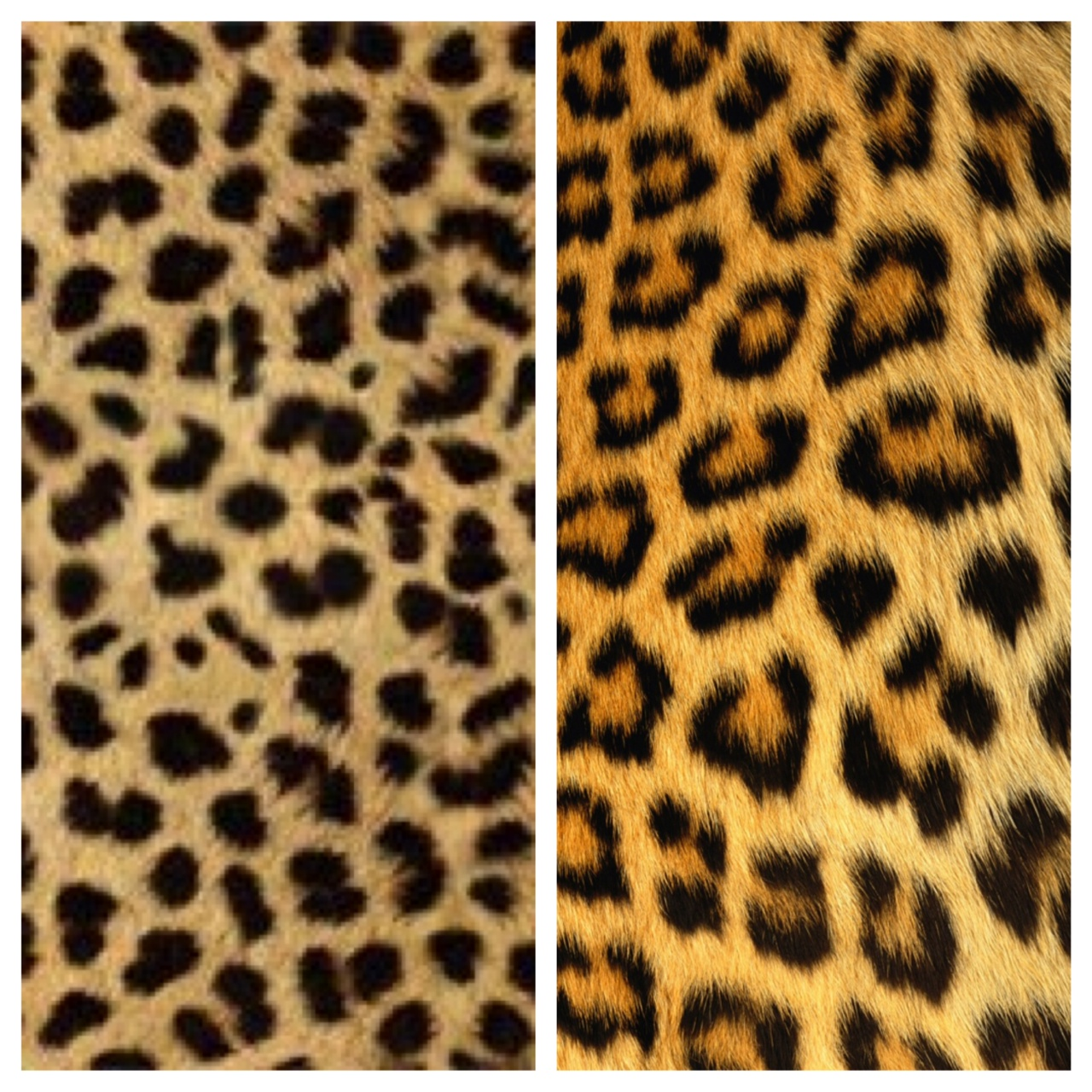 Tone of Grey: Style Faux Pas: Cheetah Print vs. Leopard Print