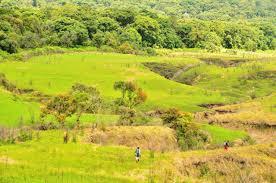 jenis-jenis hutan di Indonesia
