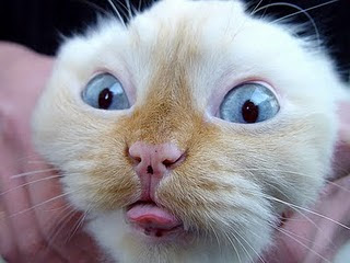 Cute Funny animals faces