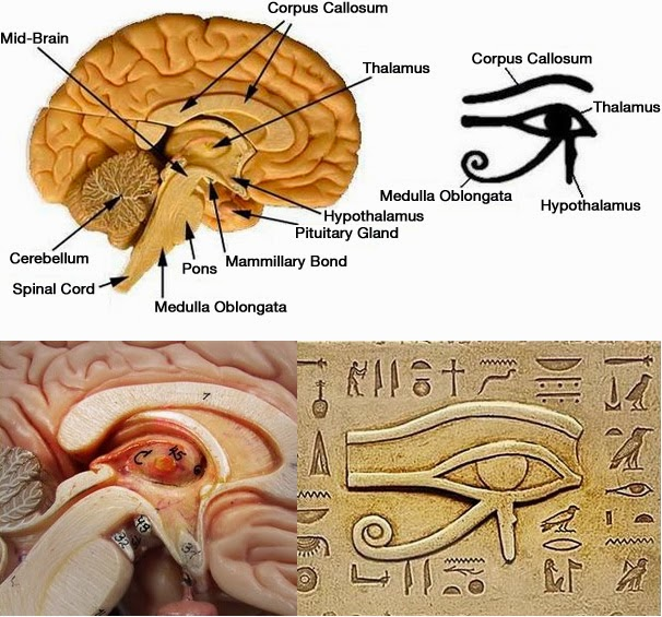 European Marketing Network: The Pineal Gland Or The Third Eye The ...