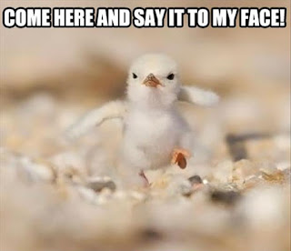 funny pictures birds