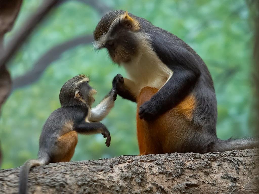 "<img src=""http://2.bp.blogspot.com/-FuXSnATvALg/UtkNgZGsd-I/AAAAAAAAIcY/dOrZWDRZaFQ/s1600/animal-wallpapers-primates-tender-moments.jpeg"" alt=""tender moments"" />"