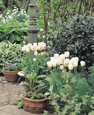 Spring-flowering container gardens