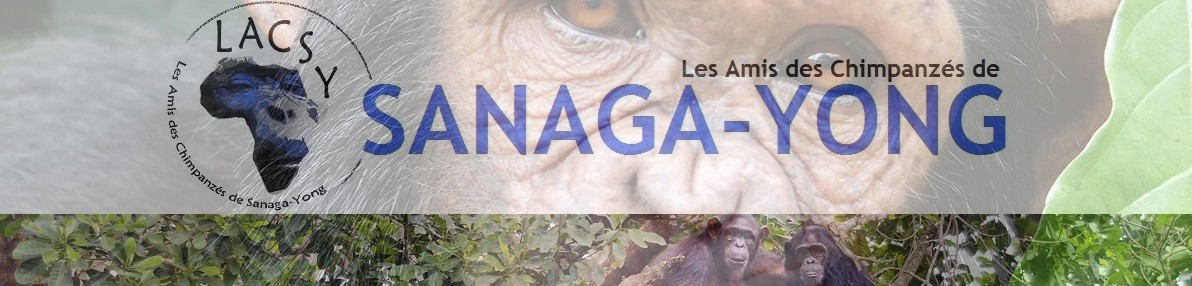 Les Amis des Chimpanzés de SANAGA-YONG
