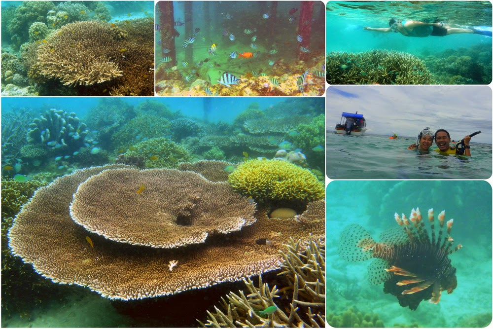 Keindahan Bawah Laut Derawan