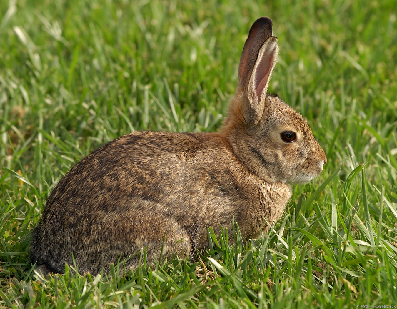 rabbits are prey animals therefore steadily and are aware of their ...