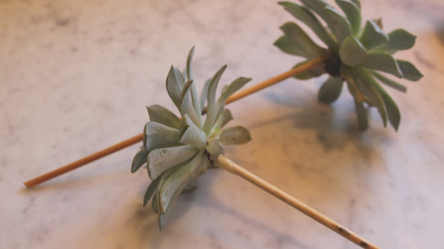 ~how to make a succulent arrangement~