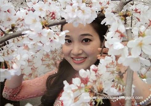 Mc Hồng Phượng ngẩn ngơ trước hoa anh đào Nhật Bản 4