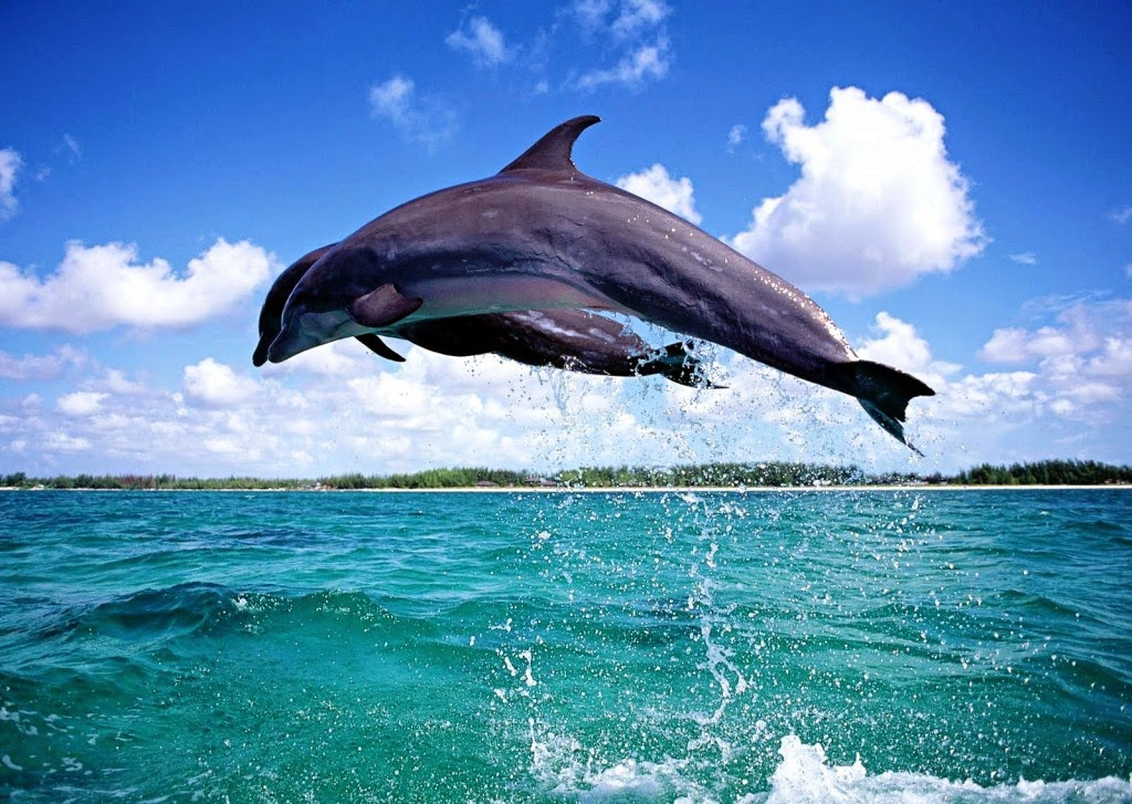 Menari Bersama Lumba-Lumba Di Teluk Kilauan