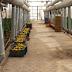 Besparing waterverbruik in Egyptische groenteteelt