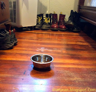Cat food bowl in the middle of a room
