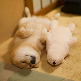 Ο σκύλος που κοιμάται πάντα με το αρκουδάκι του... [photos]