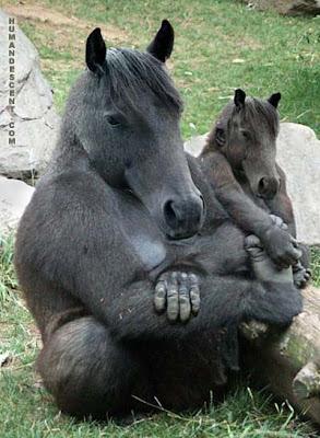 OrangPadi , Orang Padi , Orang , Padi , gorilla , kuda , horse , pelik , ajaib , kelako , kelakar , funny
