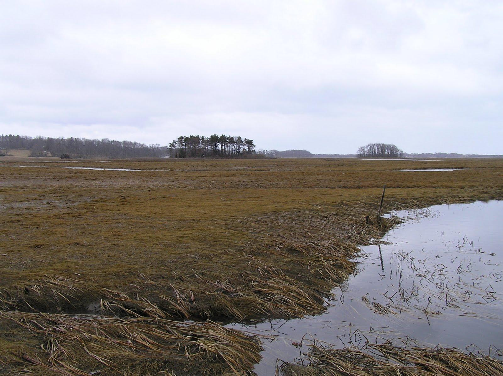 On the Land: Ipswich Salt Marsh CRs