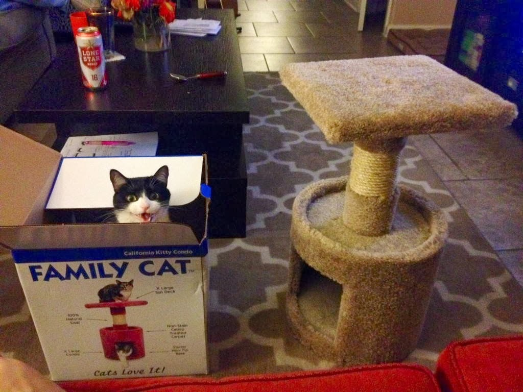 Funny cats - part 92 (40 pics + 10 gifs), cat prefers box than cat tree