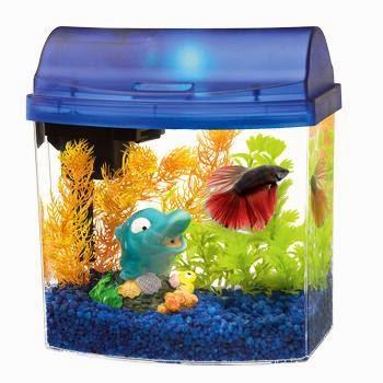 cara membuat akuarium mini