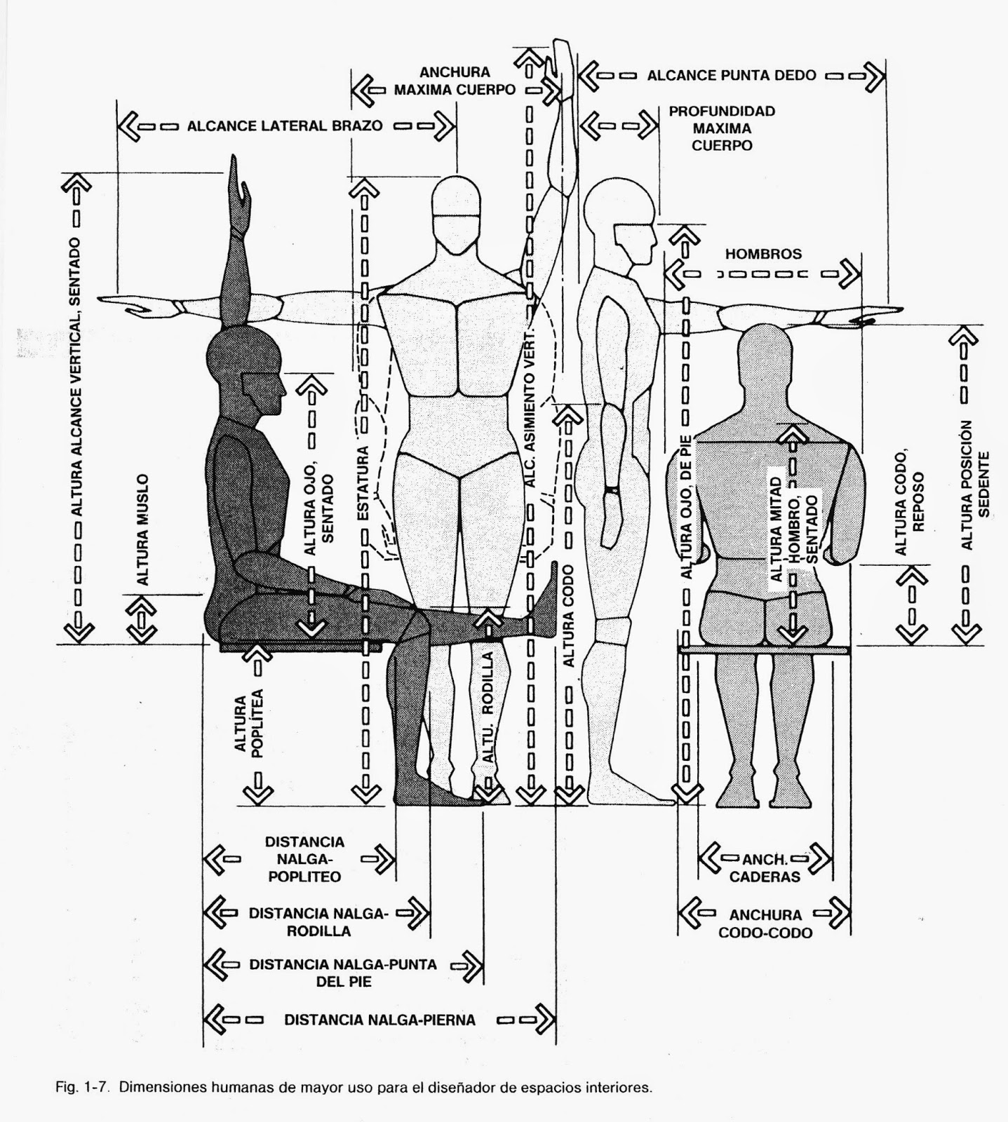 Ergonomia eucd nombres de las dimensiones humanas for Antropometria libro