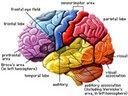 3 Penyebab Otak Menyusut