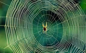 Jaring laba-laba, obat kuno di Inggris untuk malaria | inform-kesehatan.blogspot.com